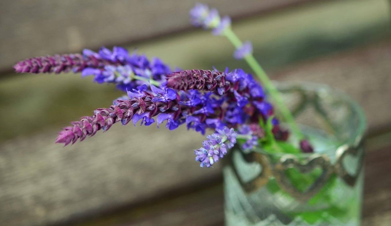 Lavendel in aller Munde